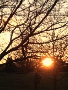 sunset, birdhouse, photography