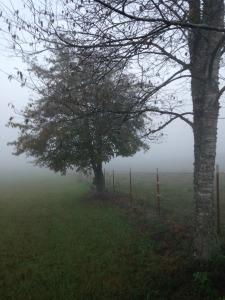 photography, fog, tree, field